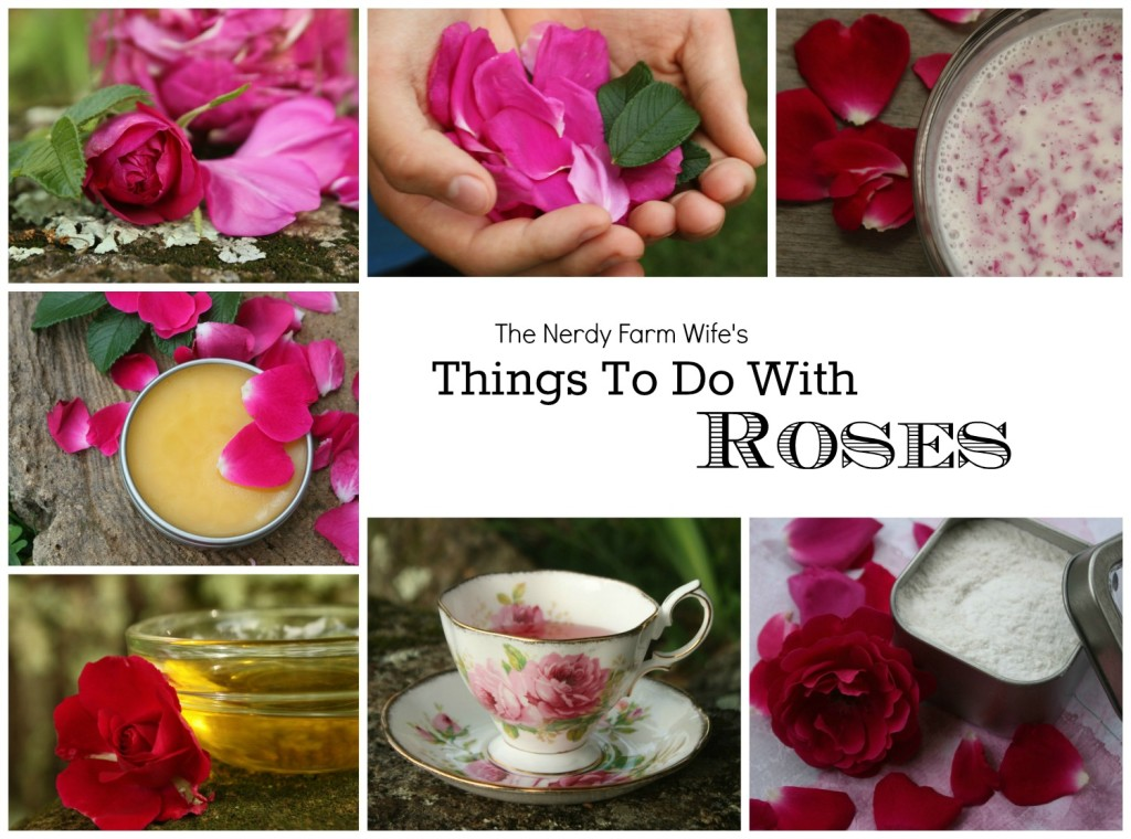 Things To Do With Roses eBook