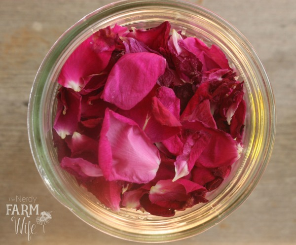 Rose Petals Collected in a glass jar on a wooden background