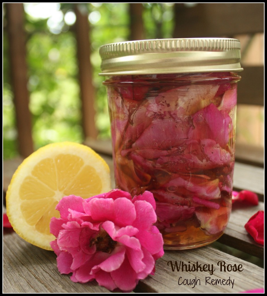 Whiskey Rose Cough Remedy