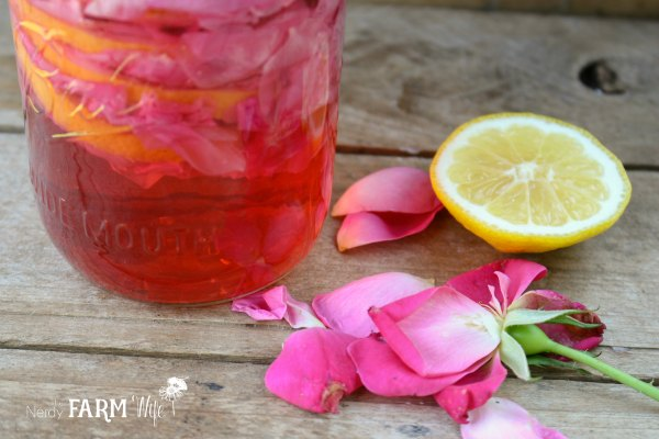 Lemon slices, rose petals layered in a jar to make tea for candy drops