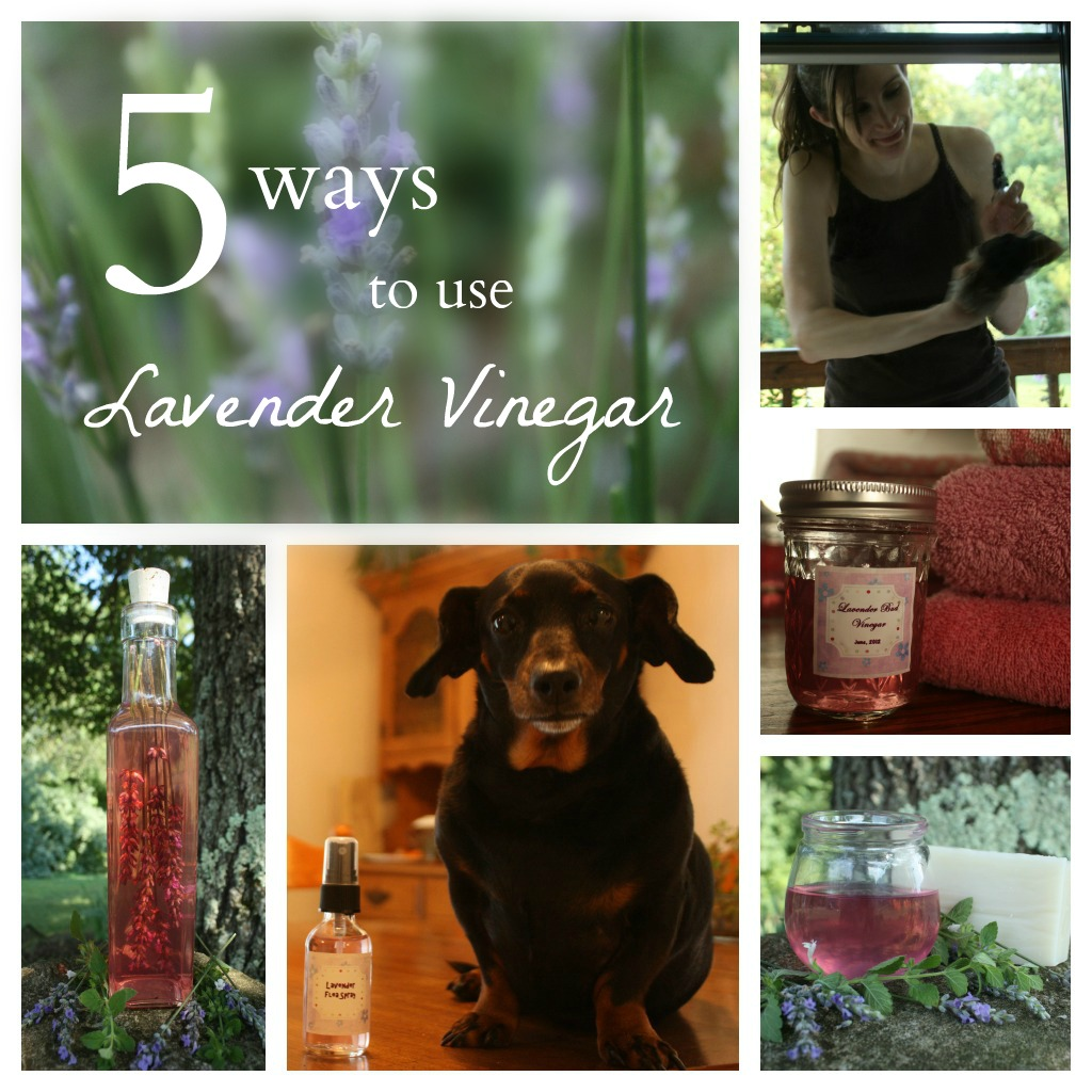 5 Ways to Use Lavender Vinegar