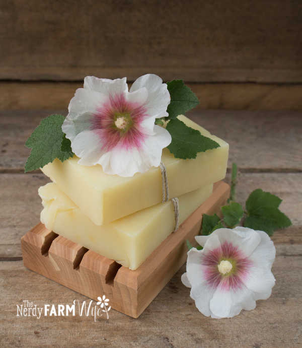 2 bars of hollyhock shampoo bar homemade soap stacked on a wooden soap dish with two pink hollyhock flowers and several green hollyhock leaves