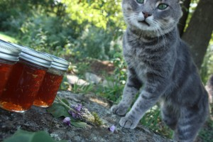 A cat beside two jars of kudzu jelly