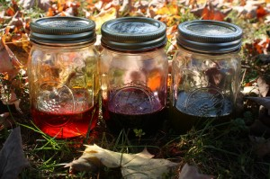 Infused Oils with Alkanet, Annatto Seed and Chlorella herbs