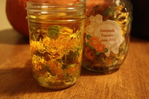 Infusing Olive Oil with Dried Calendula Flowers