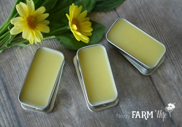 plantain lip balm in lip balm slider tins on a wooden background with fresh yellow flowers and leaves