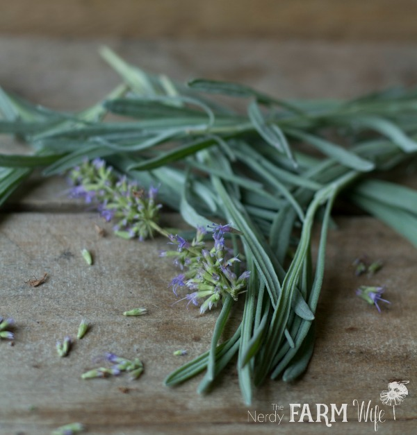 Freshly gathered lavender