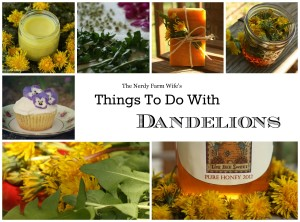Things to do with dandelions free ebook