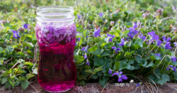 jar of violet flower vinegar outdoors with fresh violets