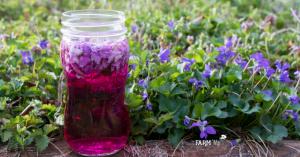 jar of violet flower vinegar outdoors with fresh violets
