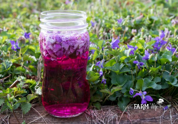 jar of purple colored vinegar in a bed of fresh violet flowers