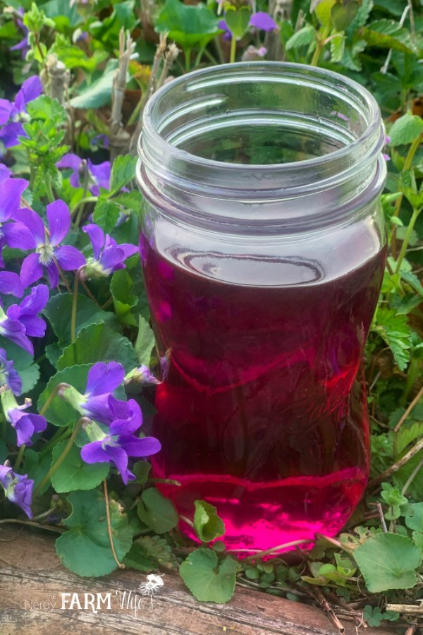 jar of pretty violet flower vinegar with purple violet flowers and green heart shaped leaves