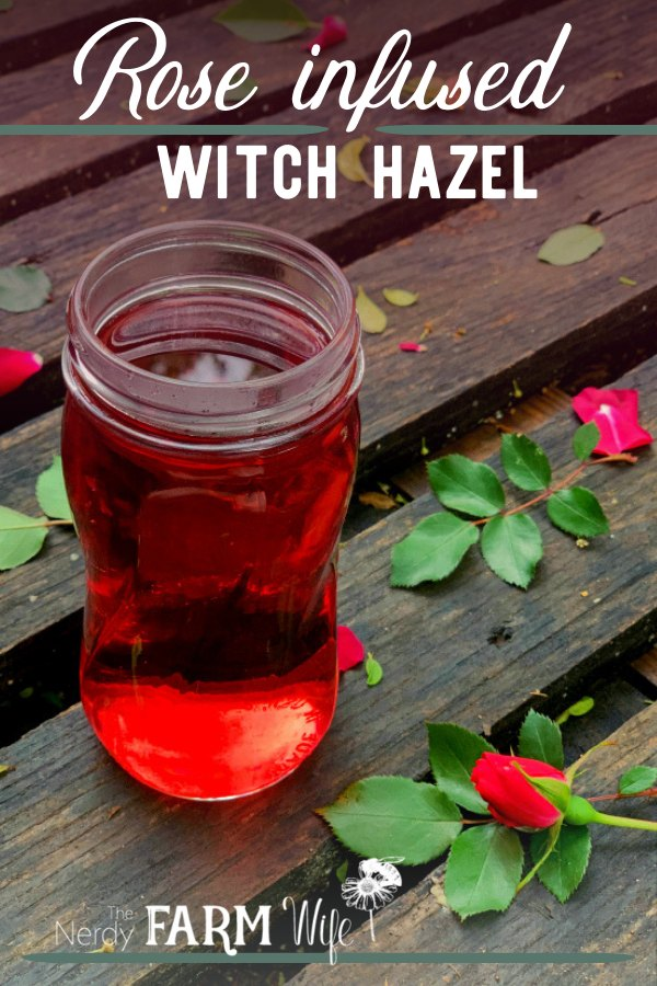 jar of ruby red rose infused witch hazel with fresh rose leaves and rose buds