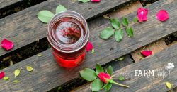 jar of rose infused witch hazel on a wooden pallet with fresh rose petals and leaves