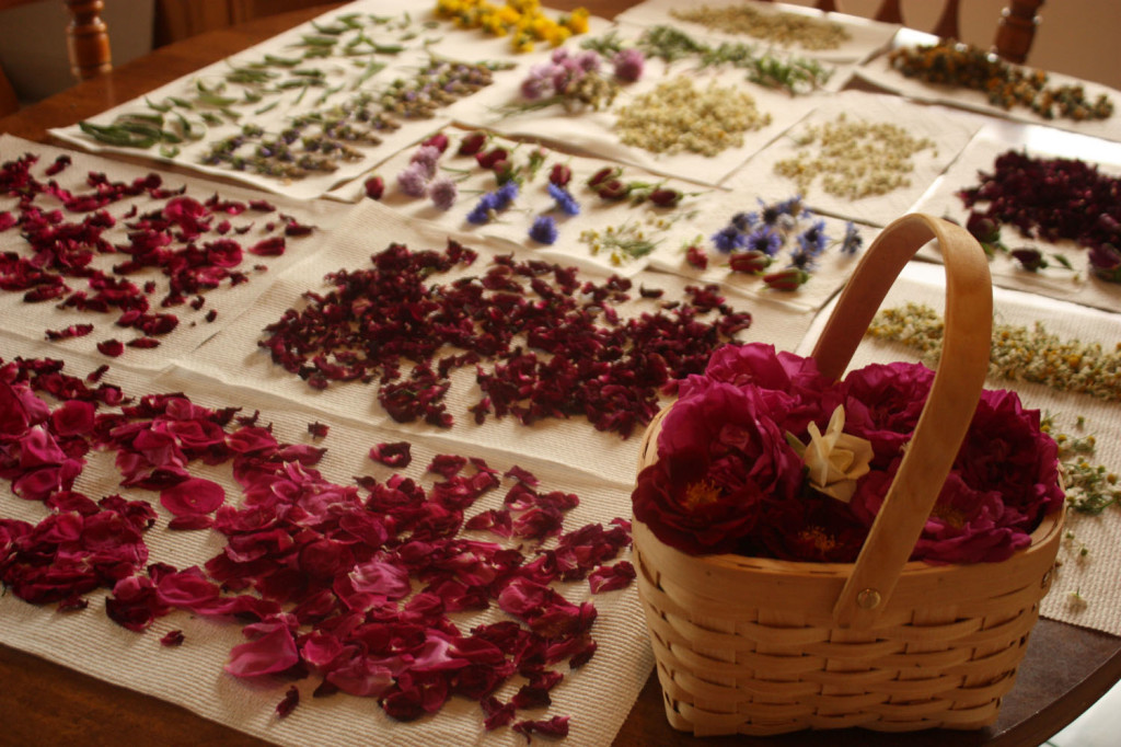 Rose petal salve recipe the nerdy farm wife for What colour roses can you get