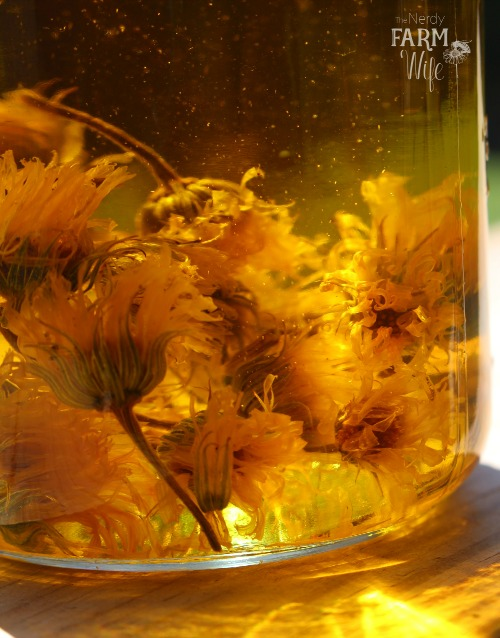 Calendula Flowers Infusing In Oil
