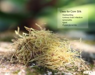 Corn Silk Uses