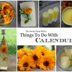Things to Do With Calendula Free eBook