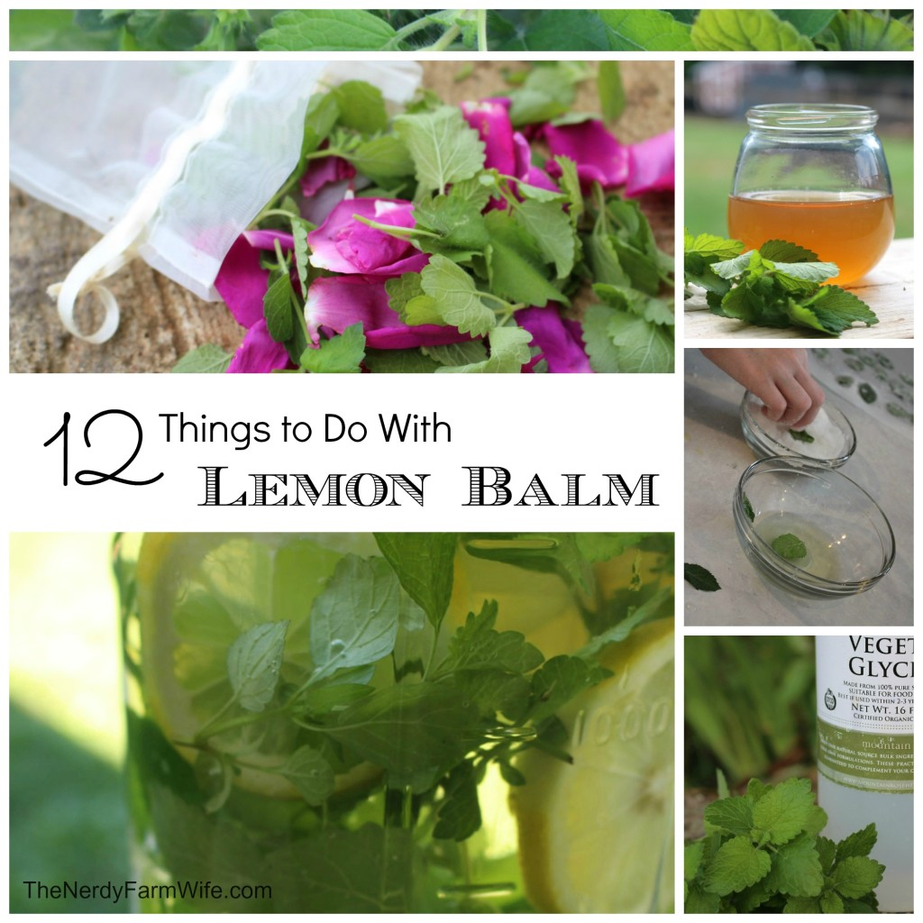 How To Use Lemon Balm for Anxiety   More!