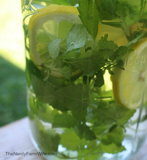 jar of freshly made herbal water made with fresh lemon slices and lemon balm leaves