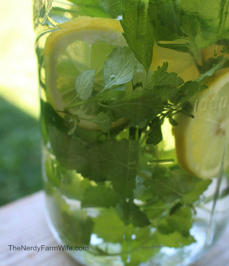Lemon Balm Herbal Water