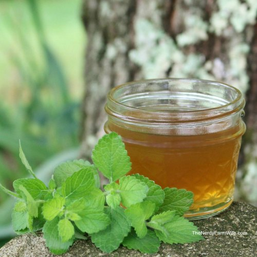 small canning jar filled with diy home remedy lemon balm honey syrup and fresh lemon balm leaves