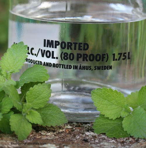 making lemon balm tincture