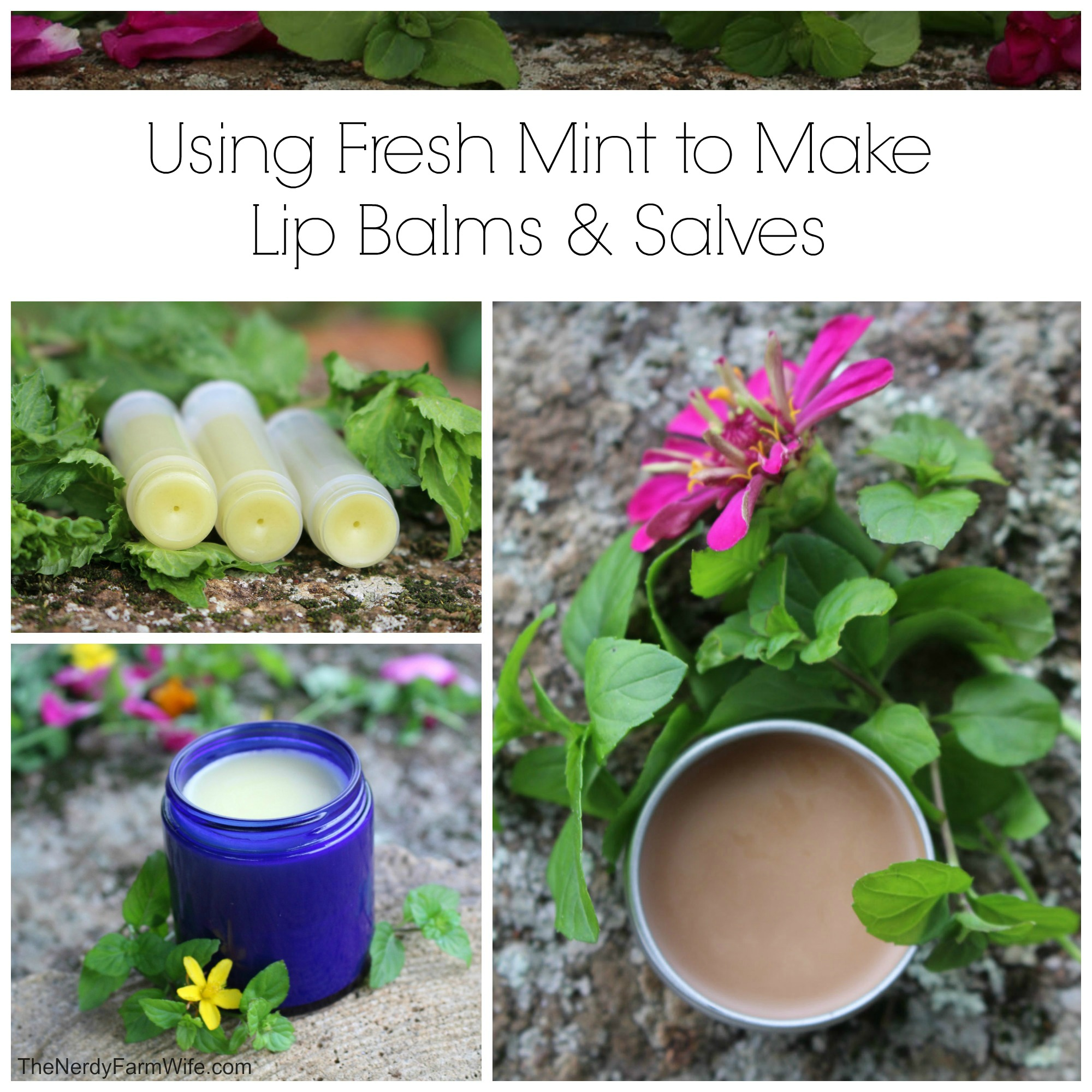 Using Fresh Mint to Make Lip Balm & Salve