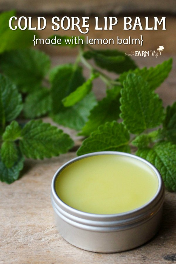 Cold Sore Lip Balm made with lemon balm - Lemon balm is a powerful antiviral that fights cold sores. Use this DIY lip balm recipe to help fight cold sores or for everyday use when lips are chapped and dry.