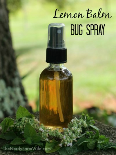 "clear glass spray bottle filled with diy homemade lemon balm bug spray natural repellent, text says: ""Lemon Balm Bug Spray"""