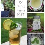 Ideas for Using Fresh Mint