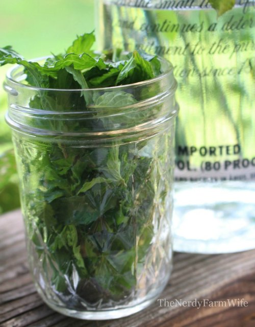 Mint Tincture
