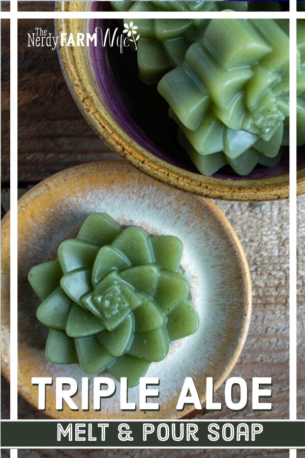 triple aloe melt and pour soap made with a succulent shaped mold
