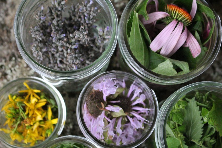 Herbs to Tincture