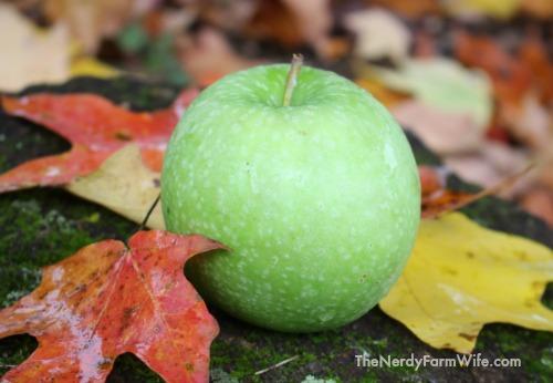 apple in fall leaves