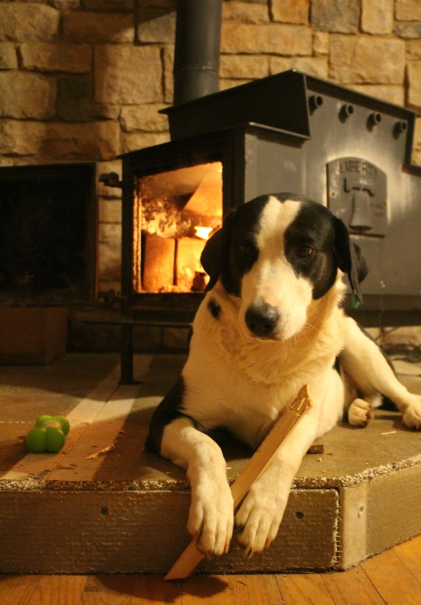 bandit by the fire