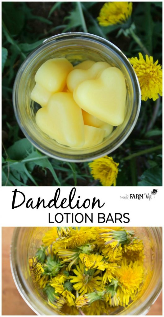 How to make dandelion lotion bars to soothe rough skin and sore hands.