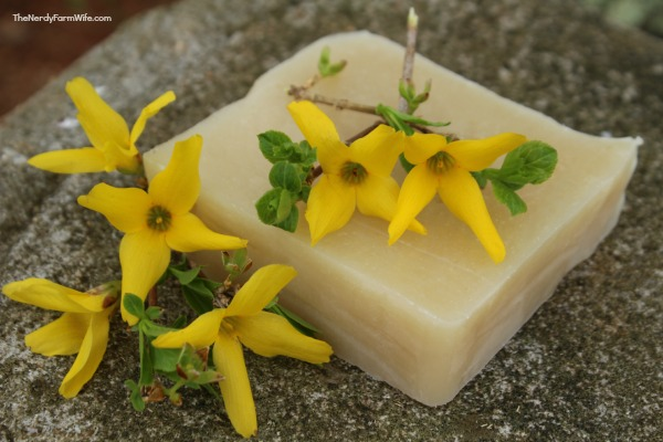forsythia cold process soap recipe