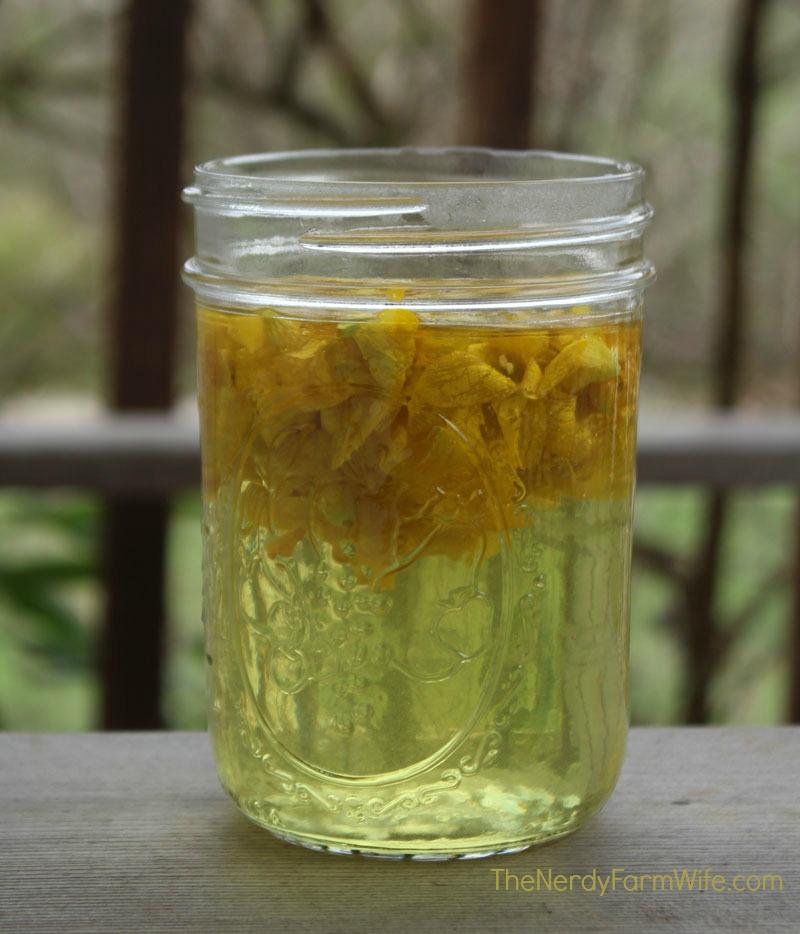 Forsythia Flower Tea