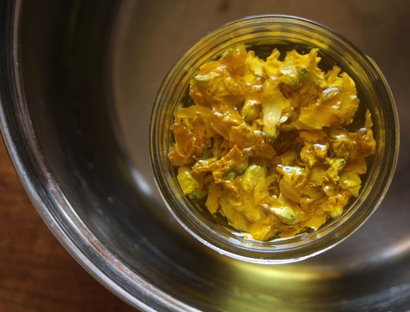 infusing forsythia flowers in olive oil
