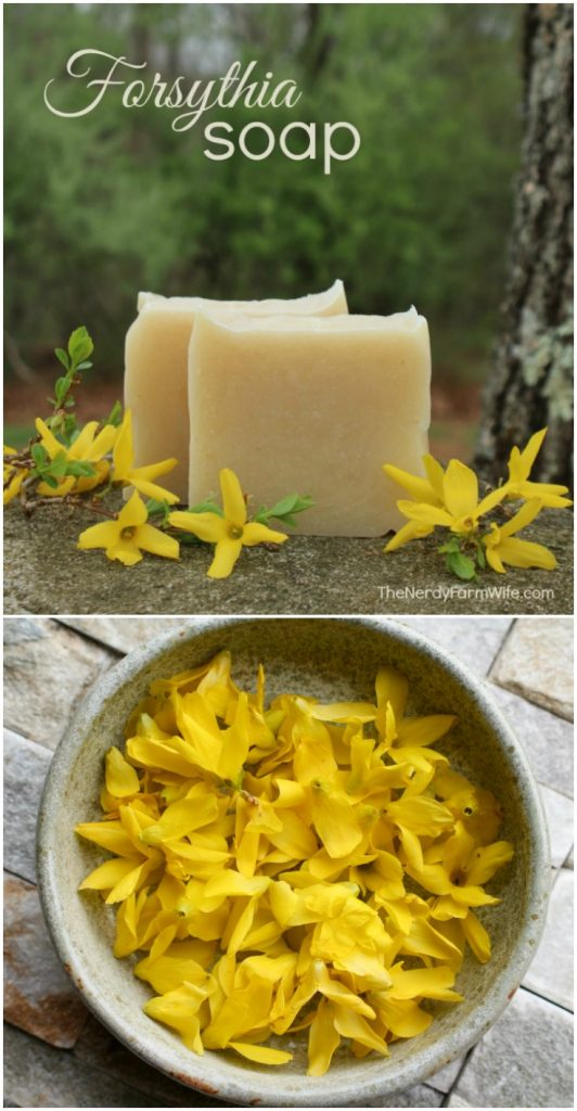 bars of soap and bowl of forsythia flowers