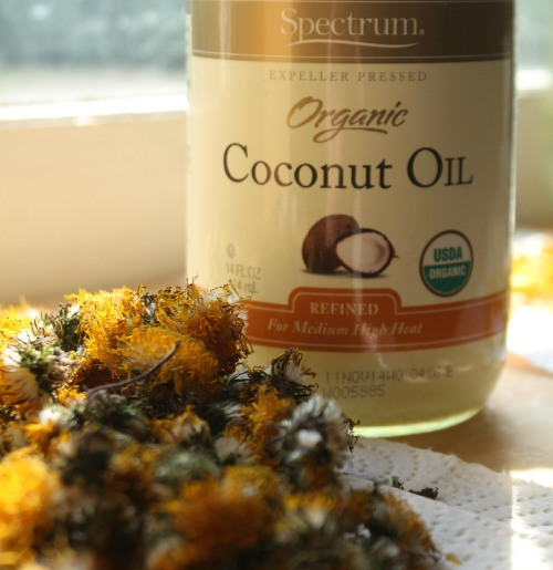 coconut oil and dandelions