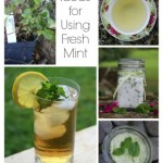 Ideas for Using Mint