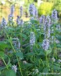 5 soil amendments for better herbs
