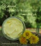 whipped dandelion and coconut oil moisturizer