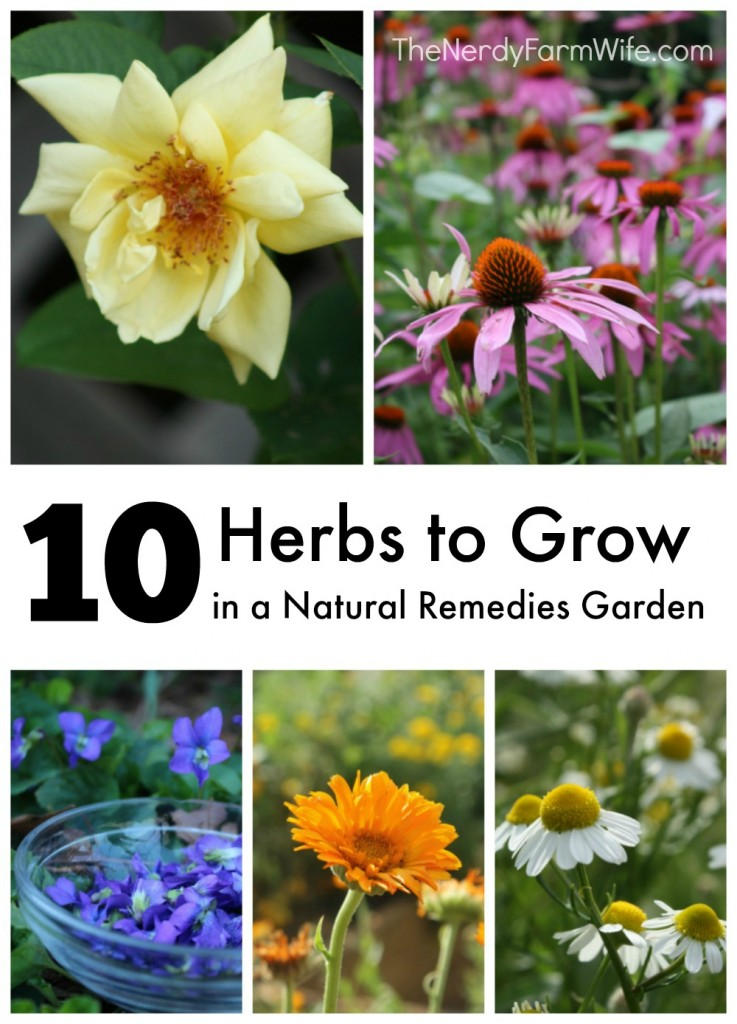 10 Natural Makeup Ideas For Everyday: 10 Herbs To Grow In A Natural Remedies Garden