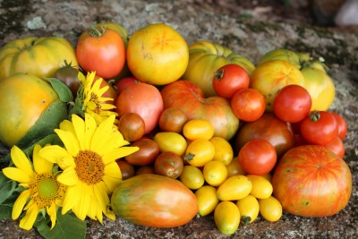 Heirloom Tomatoes in August