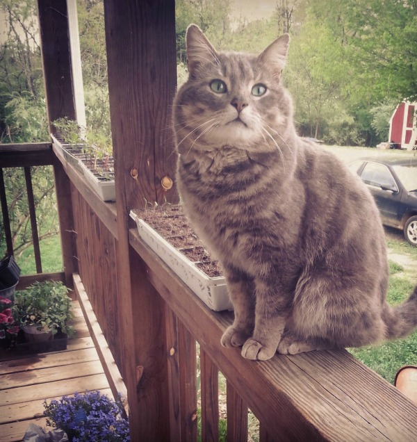 Rascal, Hanging Out With Some Seedlings On the Front Porch