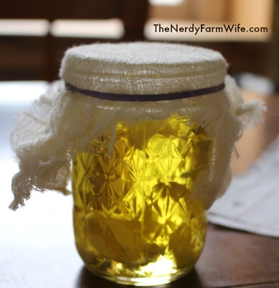garlic ear oil infusing in a sunny spot for three days