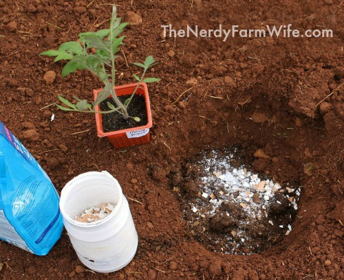 Add epsom salts egg shells compost and plant tone to planting hole
